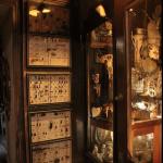 boites enthomologie©fabien.ansault cabinet-curiosités-chamesson chatillon sur seine café associatif des z'uns possible terrasse bord de seine