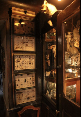 Cabinet De Curiosites Les Z Uns Possible Exposition Chatillon
